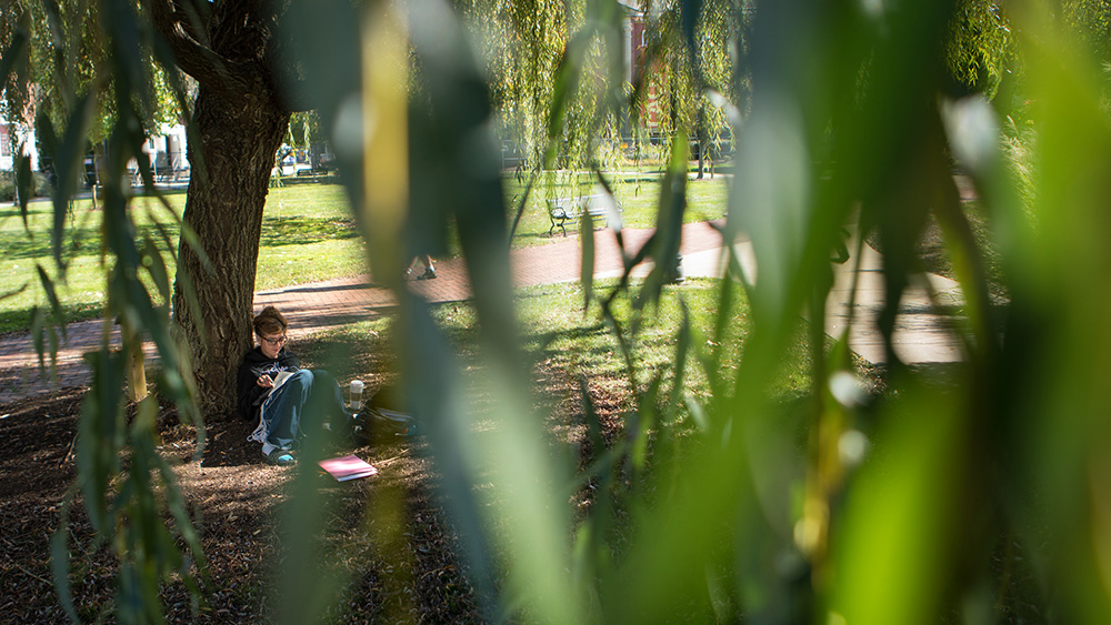 A student studies under a tree on campus.